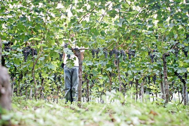 schlechte verstecke / bellinzona 2005 / foto: nils hendrik mueller